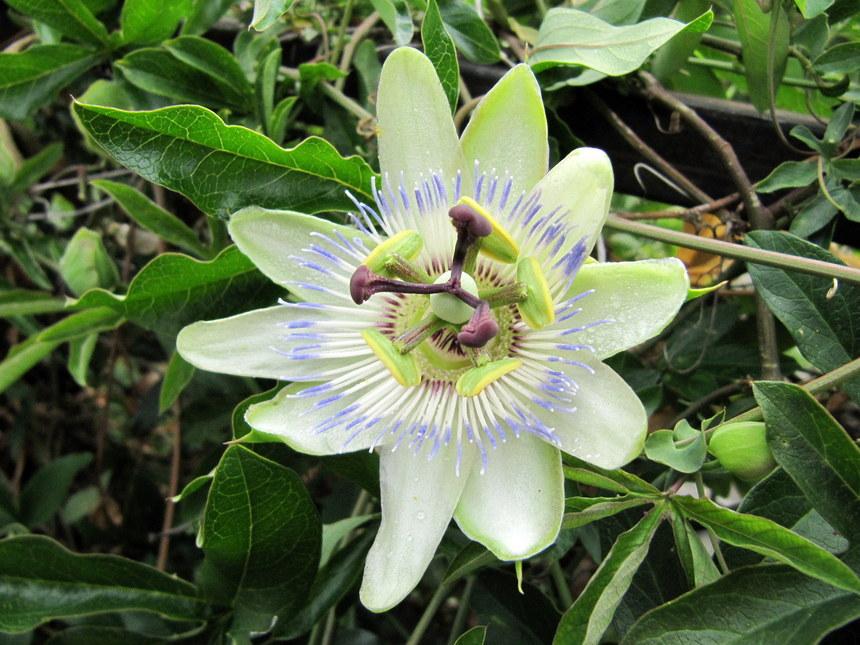 каждый растения абхазии фото с названием есть документы, фотографии